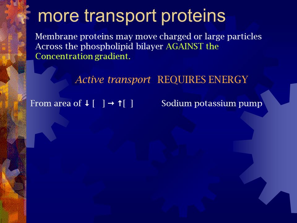 more transport proteins