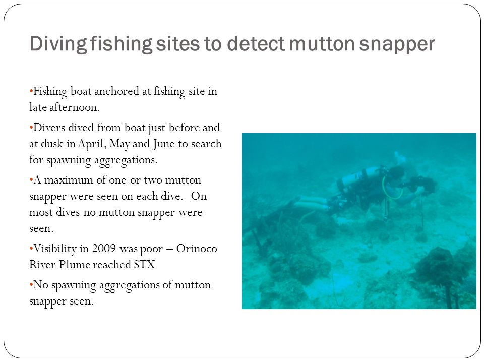 Diving fishing sites to detect mutton snapper