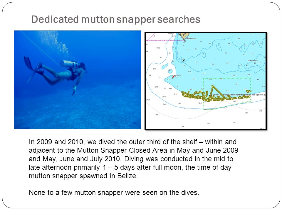 Dedicated mutton snapper searches