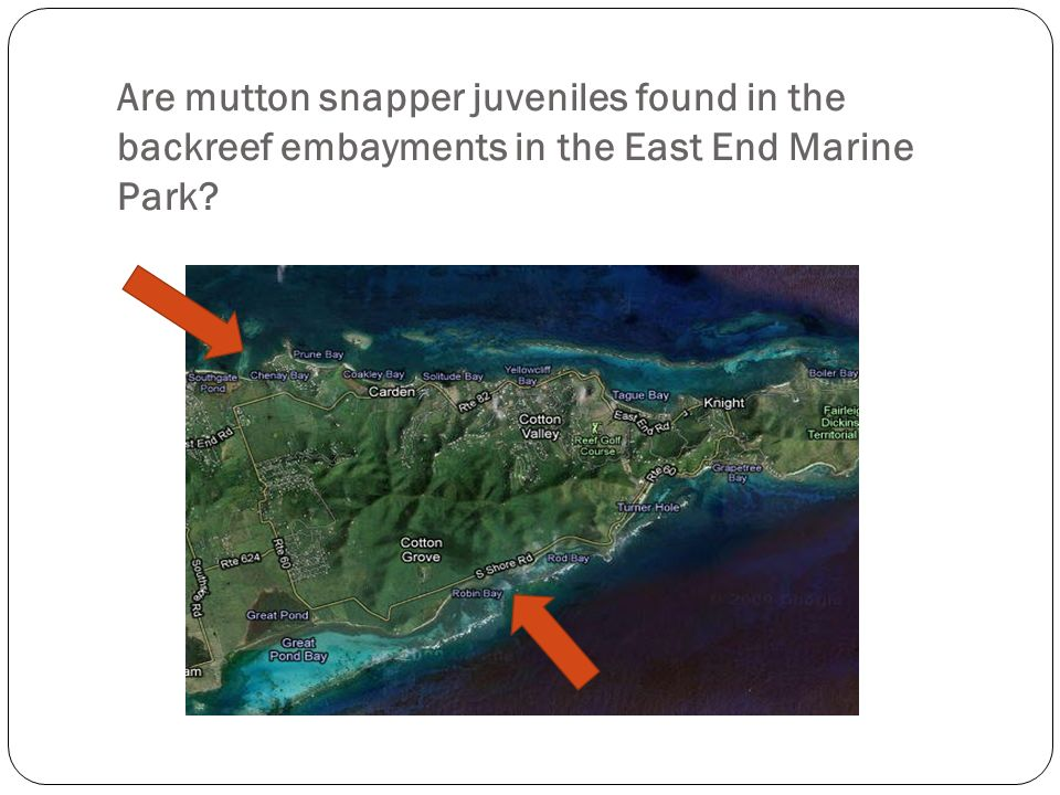 Are mutton snapper juveniles found in the backreef embayments in the East End Marine Park