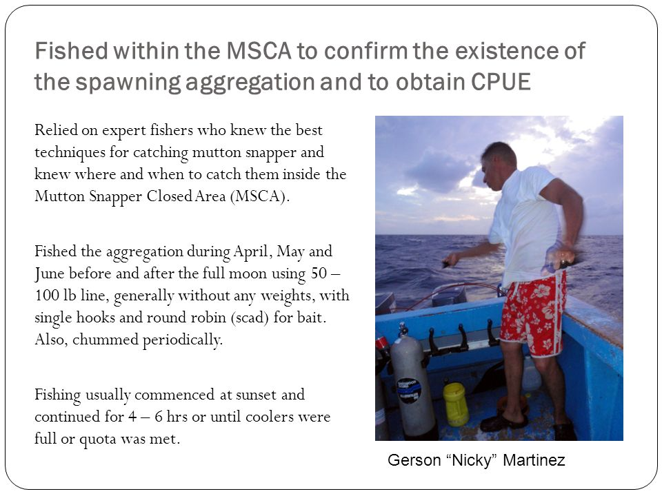 Fished within the MSCA to confirm the existence of the spawning aggregation and to obtain CPUE
