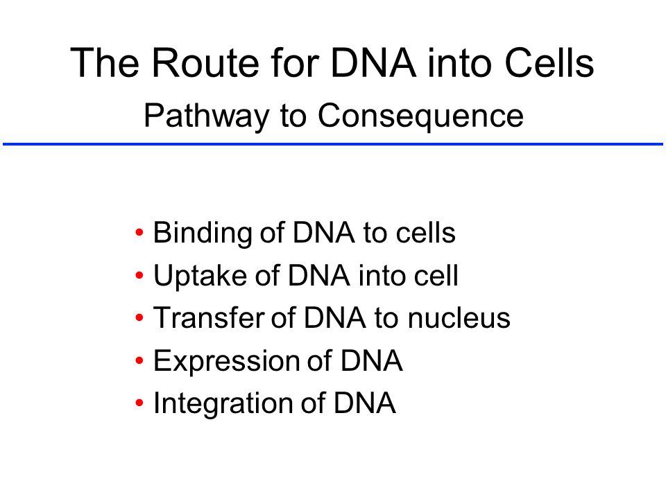 The Route for DNA into Cells