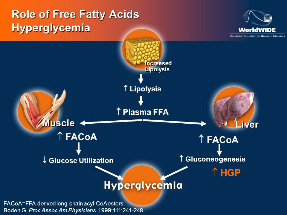 Role of Free Fatty Acids Hyperglycemia