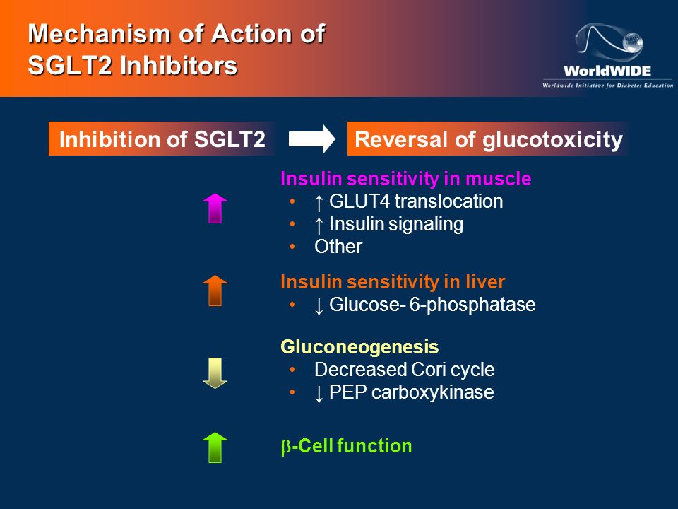 Mechanism of Action of SGLT2 Inhibitors