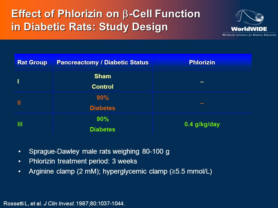 Effect of Phlorizin on -Cell Function in Diabetic Rats: Study Design