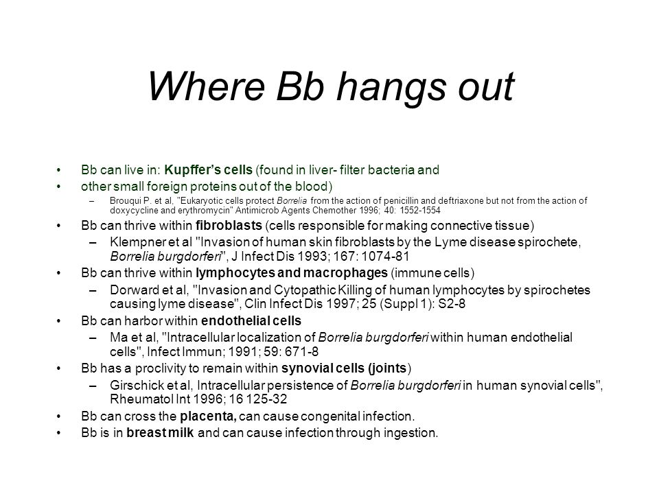 Where Bb hangs out Bb can live in: Kupffer's cells (found in liver- filter bacteria and. other small foreign proteins out of the blood)