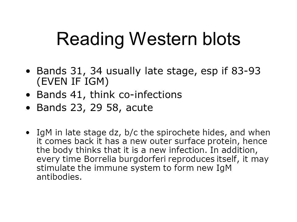 Reading Western blots Bands 31, 34 usually late stage, esp if 83-93 (EVEN IF IGM) Bands 41, think co-infections.