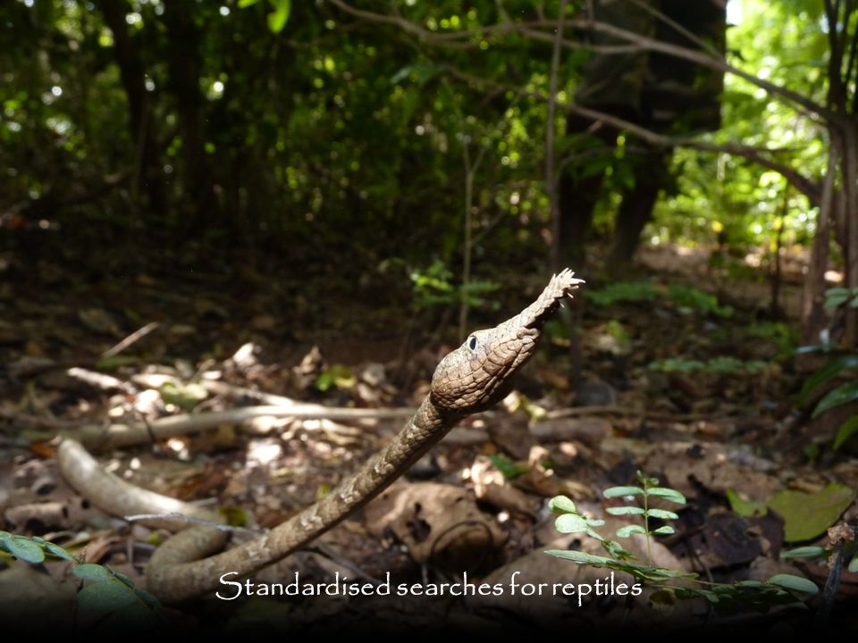 Standardised searches for reptiles