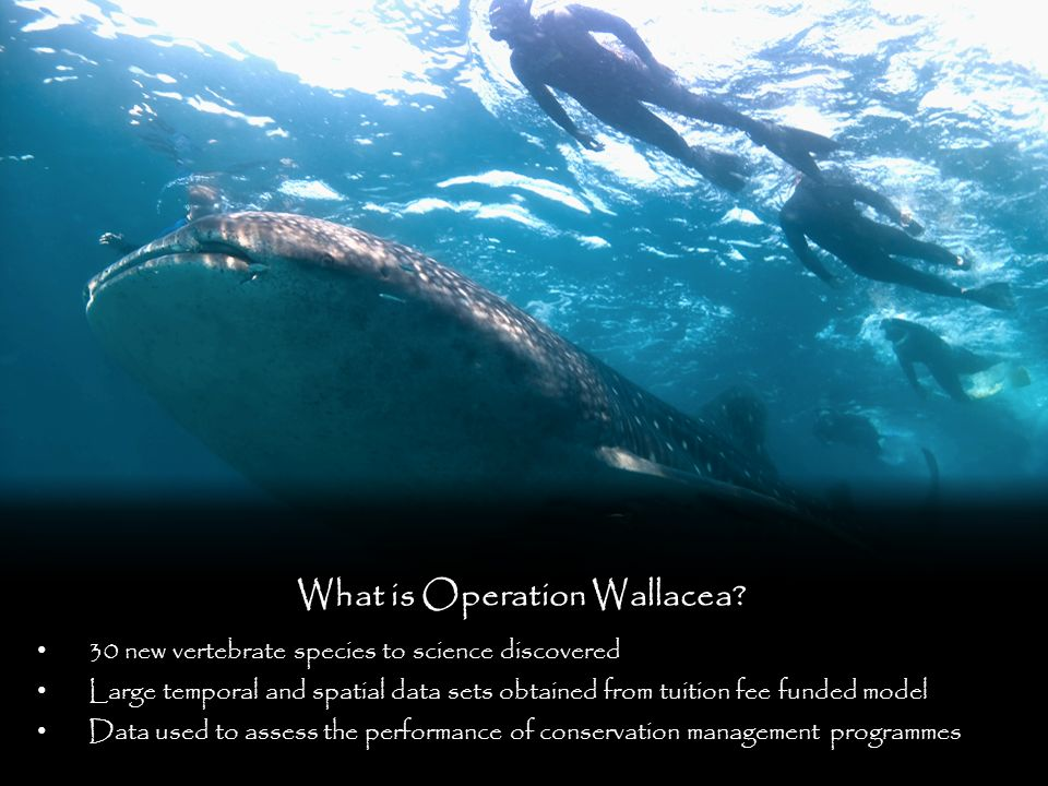 What is Operation Wallacea