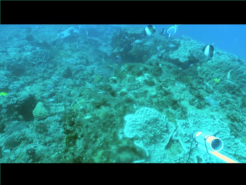 OK let's try it – this is a video of one of the reefs in Mozambique