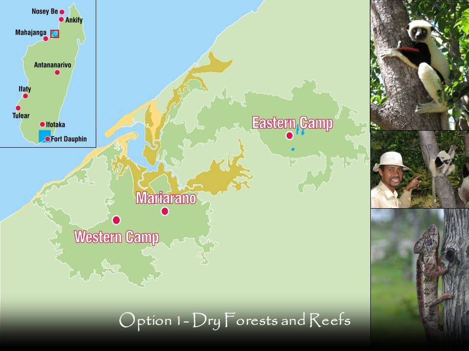 Option 1- Dry Forests and Reefs