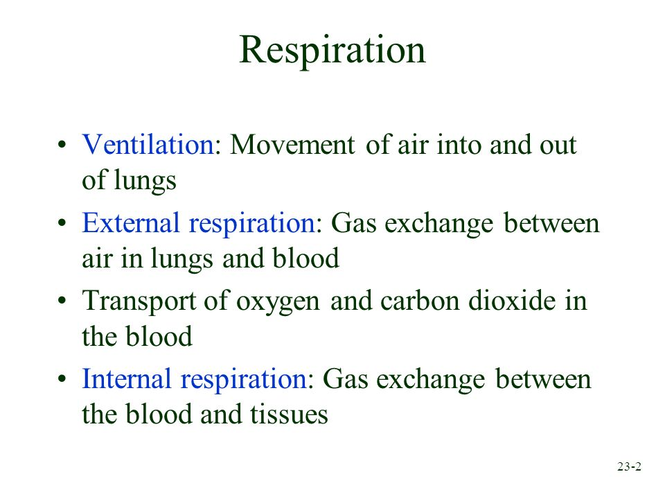 Respiration Ventilation: Movement of air into and out of lungs