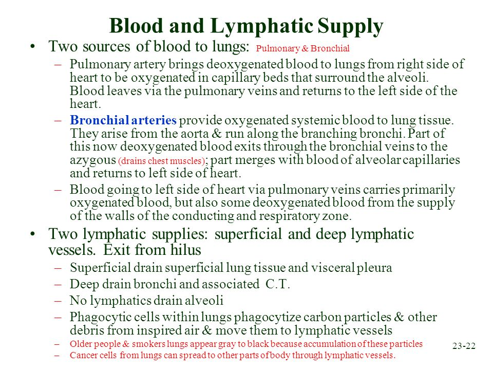 Blood and Lymphatic Supply