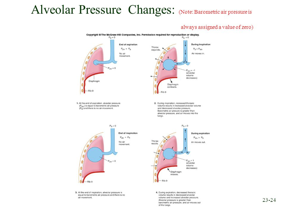Alveolar Pressure Changes: (Note: Barometric air pressure is
