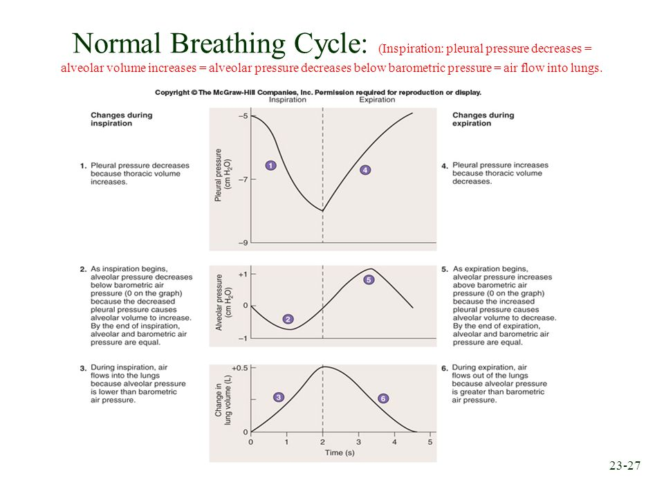 Normal Breathing Cycle: (Inspiration: pleural pressure decreases = alveolar volume increases = alveolar pressure decreases below barometric pressure = air flow into lungs.