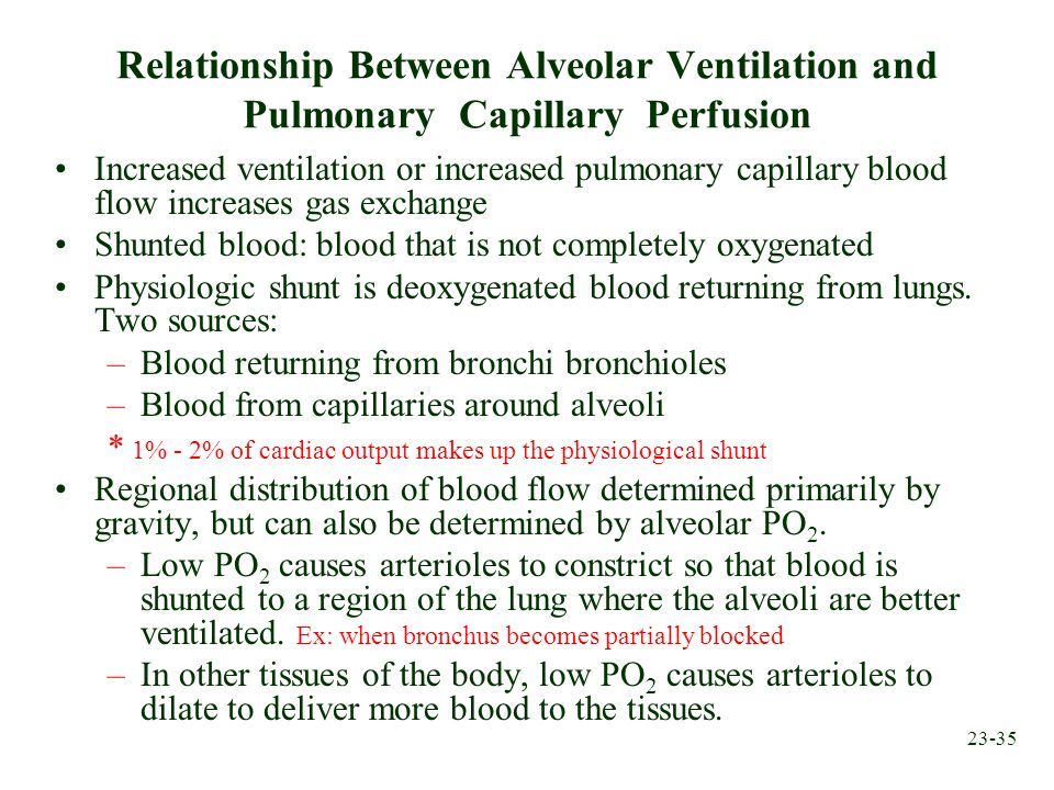 Relationship Between Alveolar Ventilation and Pulmonary Capillary Perfusion