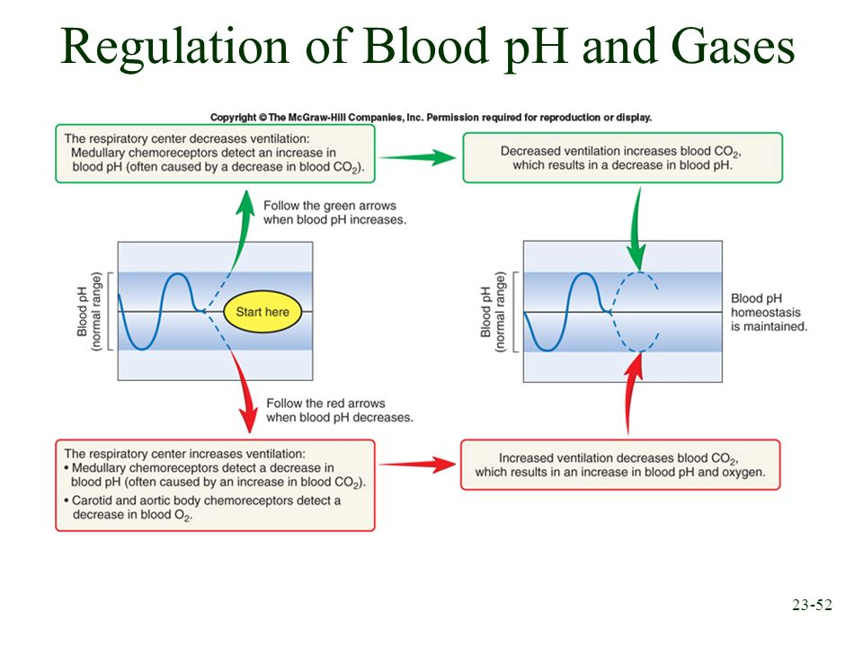 Regulation of Blood pH and Gases