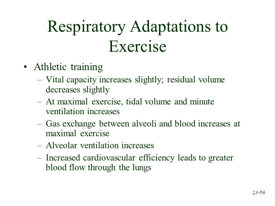Respiratory Adaptations to Exercise
