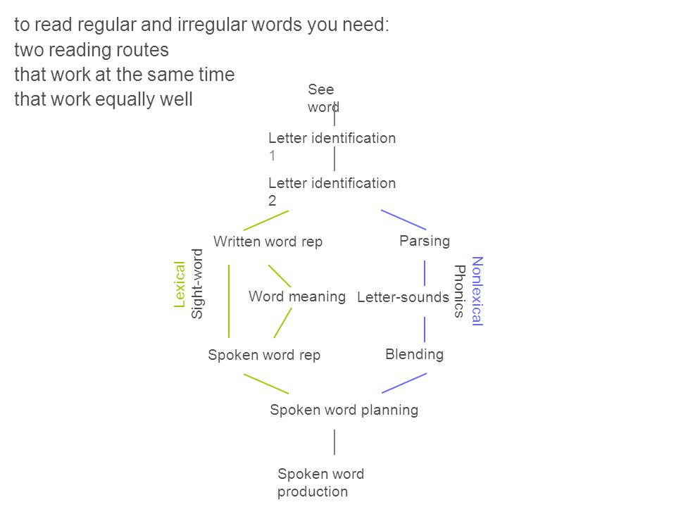to read regular and irregular words you need: two reading routes