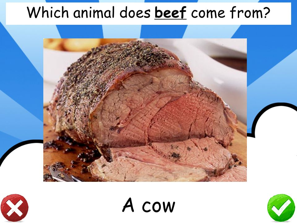 Which animal does beef come from