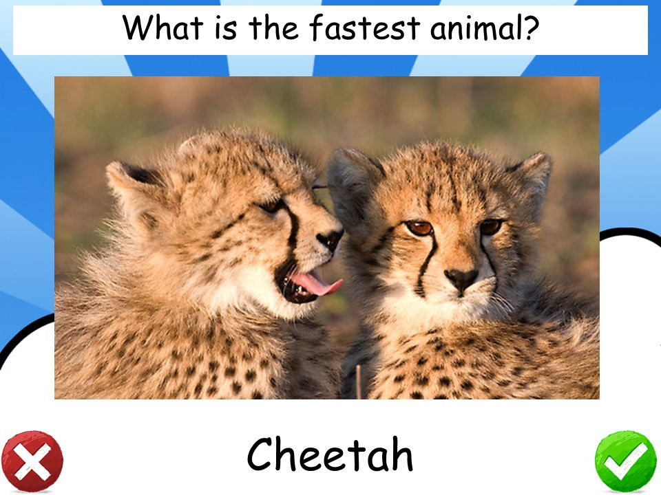 What is the fastest animal