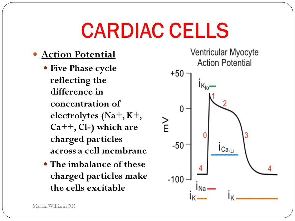 CARDIAC CELLS Action Potential