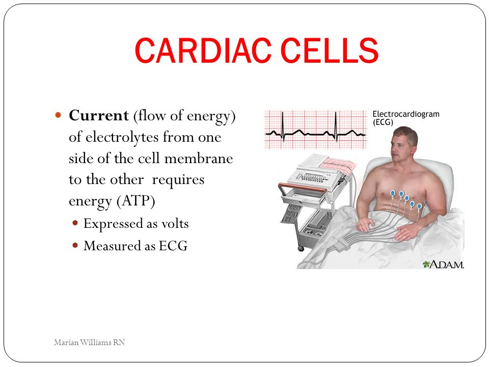CARDIAC CELLS Current (flow of energy) of electrolytes from one side of the cell membrane to the other requires energy (ATP)