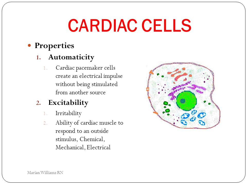 CARDIAC CELLS Properties Automaticity Excitability