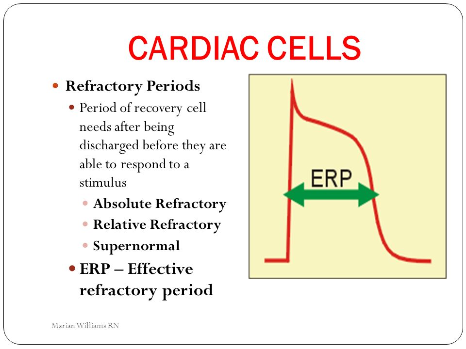 CARDIAC CELLS ERP – Effective refractory period Refractory Periods