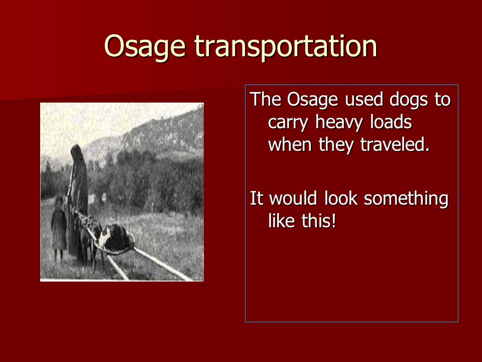 Osage transportation The Osage used dogs to carry heavy loads when they traveled.