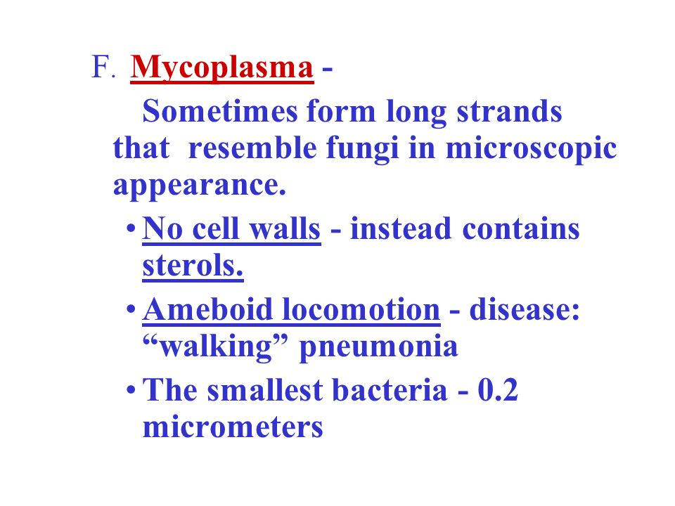 F. Mycoplasma - Sometimes form long strands that resemble fungi in microscopic appearance. No cell walls - instead contains sterols.