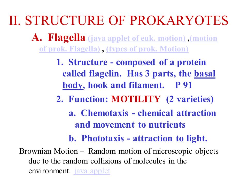 II. STRUCTURE OF PROKARYOTES