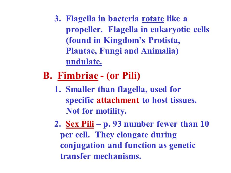 3. Flagella in bacteria rotate like a. propeller