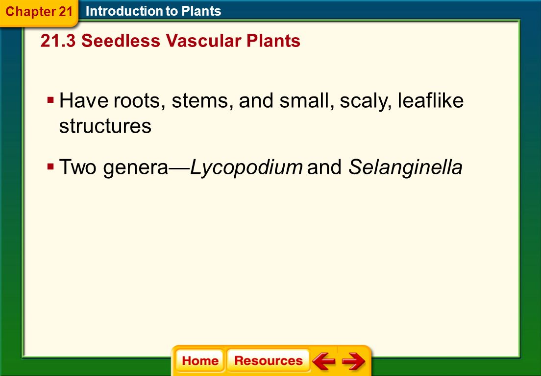 Have roots, stems, and small, scaly, leaflike structures