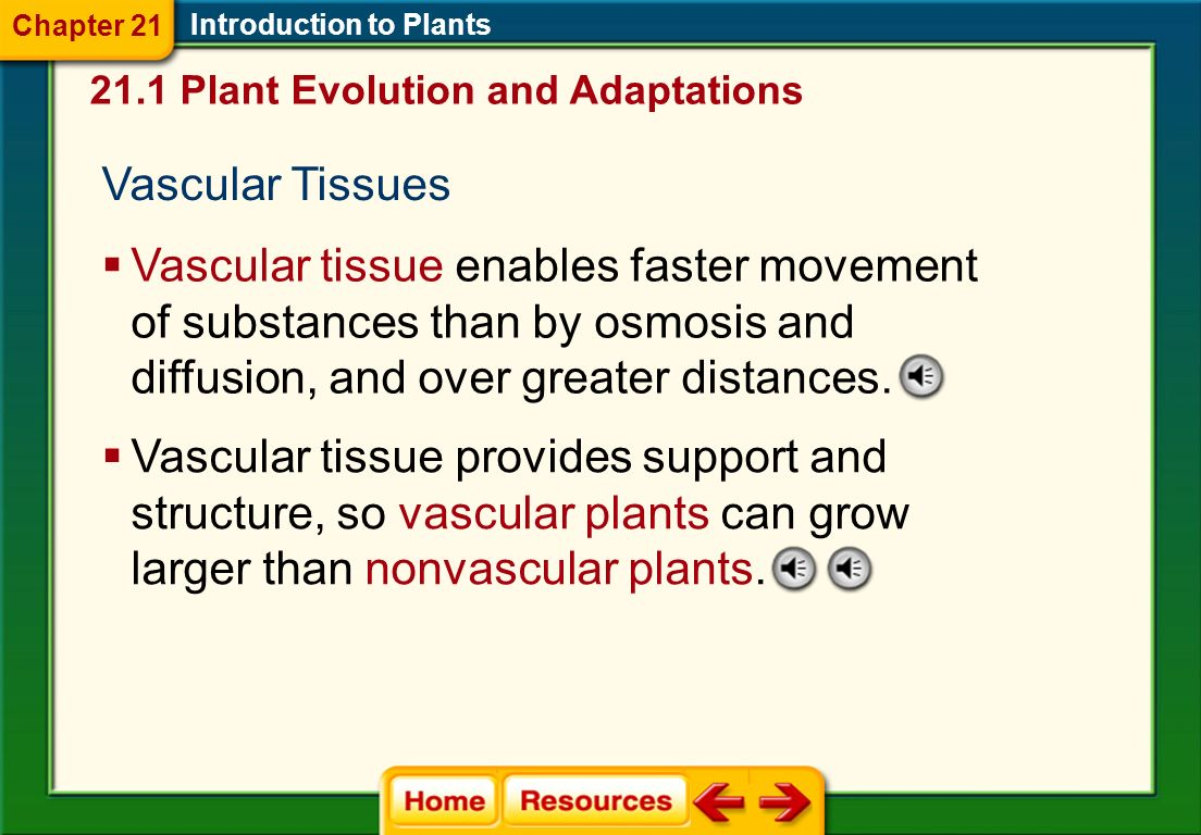 Chapter 21 Introduction to Plants. 21.1 Plant Evolution and Adaptations. Vascular Tissues.