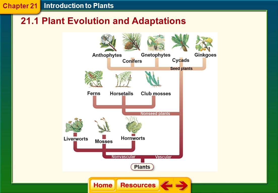 21.1 Plant Evolution and Adaptations