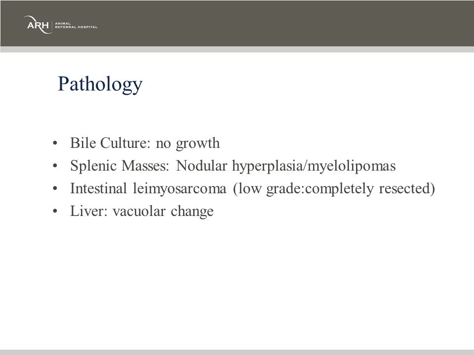 Pathology Bile Culture: no growth