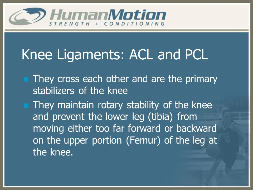 Knee Ligaments: ACL and PCL