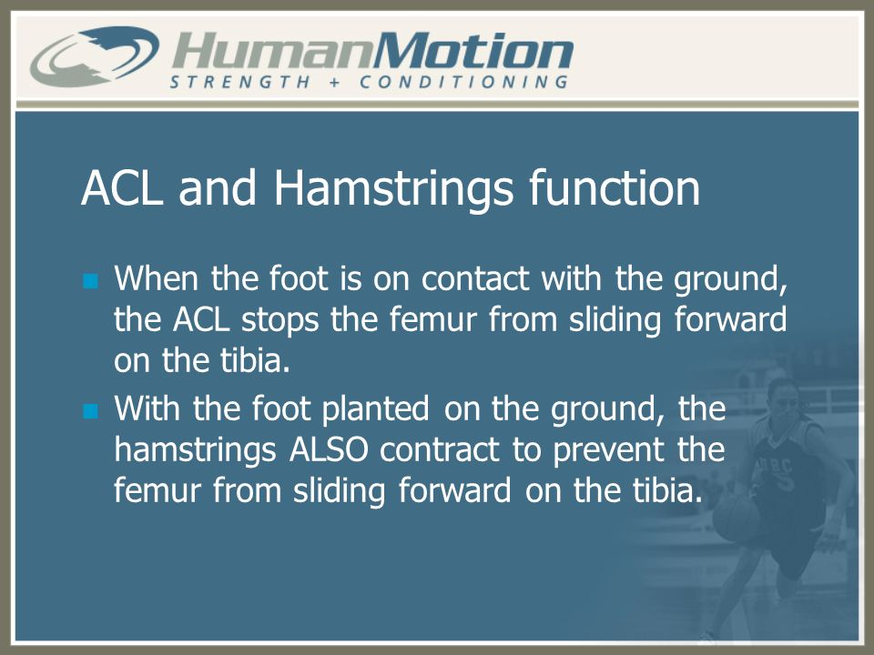 ACL and Hamstrings function