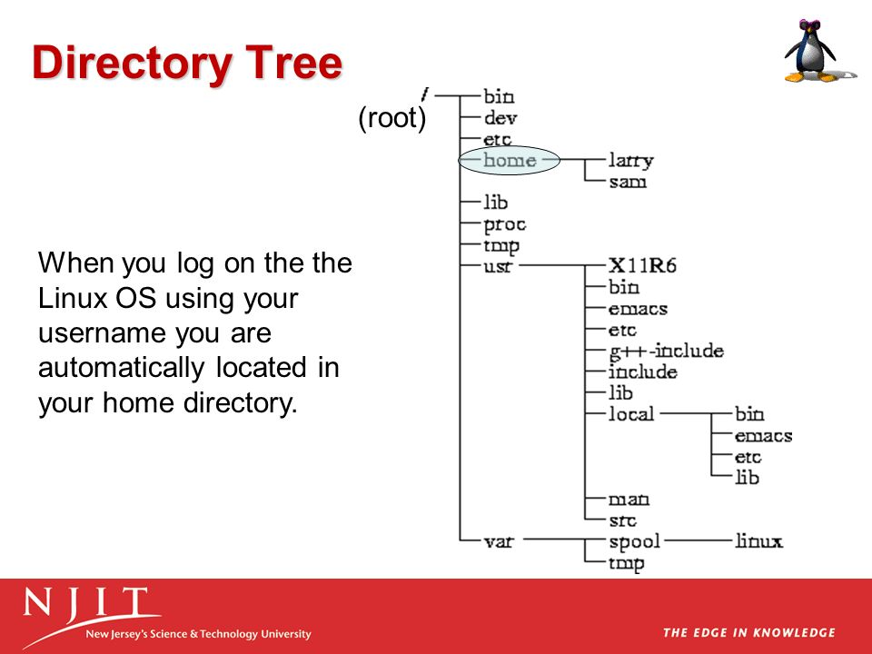 Directory Tree (root) When you log on the the Linux OS using your username you are automatically located in your home directory.