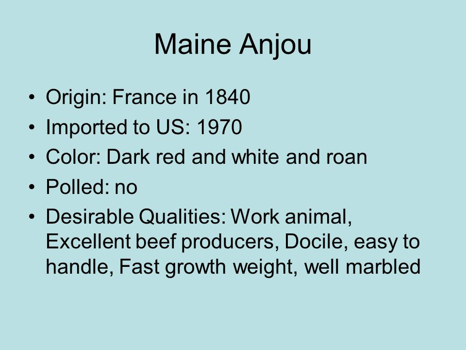 Maine Anjou Origin: France in 1840 Imported to US: 1970