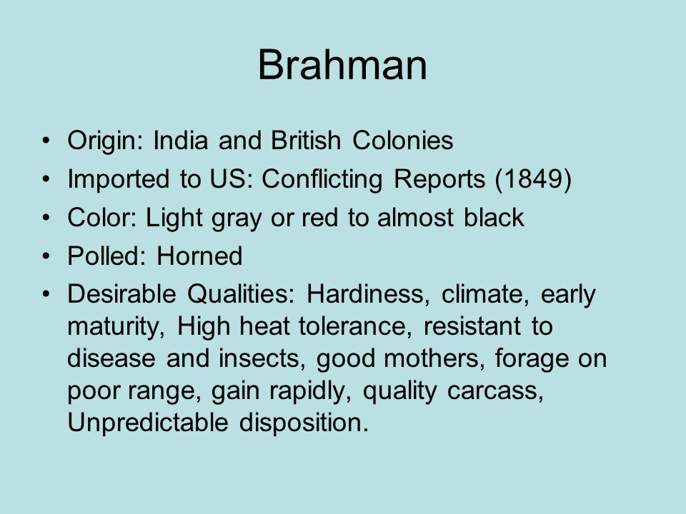 Brahman Origin: India and British Colonies