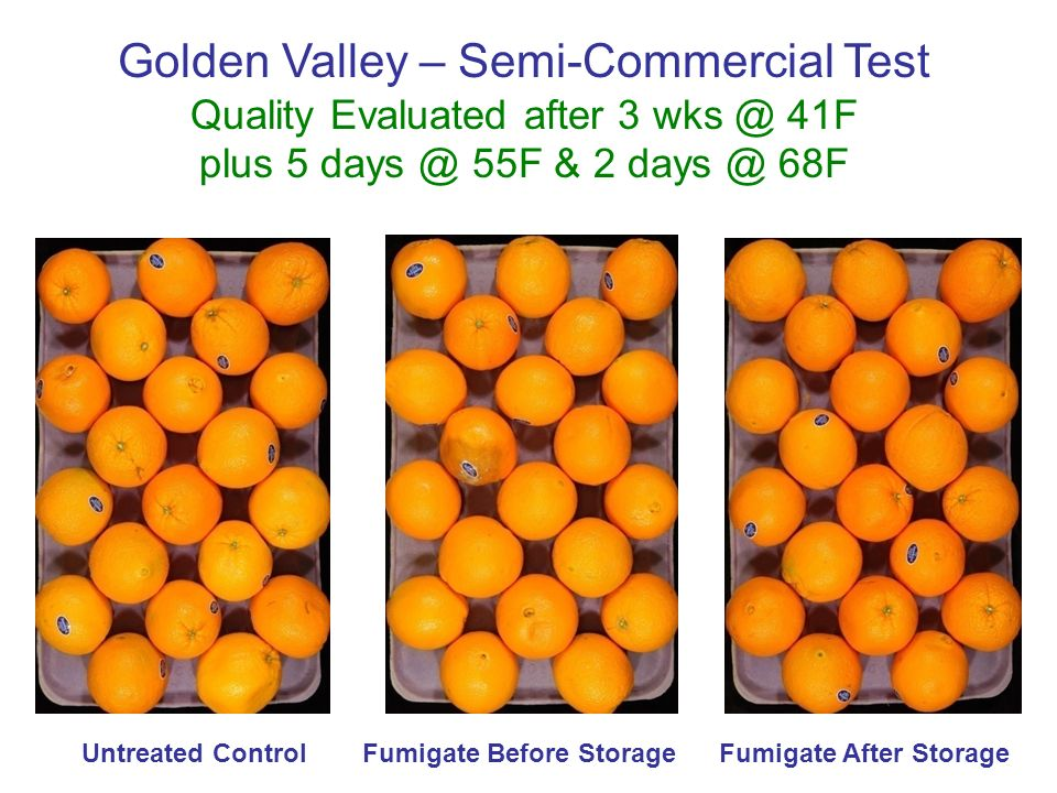 Golden Valley – Semi-Commercial Test