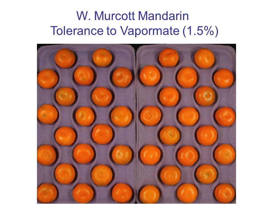 Tolerance to Vapormate (1.5%)