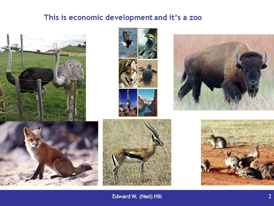 This is economic development and it's a zoo