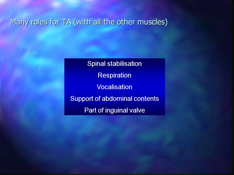 Many roles for TA (with all the other muscles)