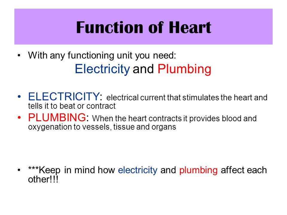 Function of Heart Electricity and Plumbing