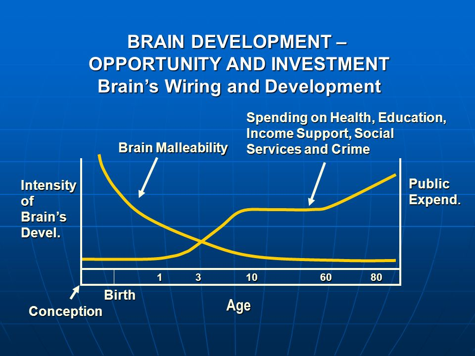 OPPORTUNITY AND INVESTMENT Brain's Wiring and Development