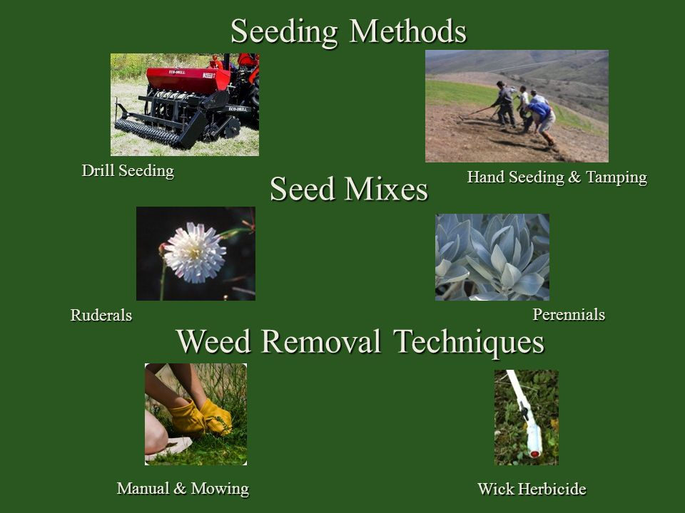 Weed Removal Techniques