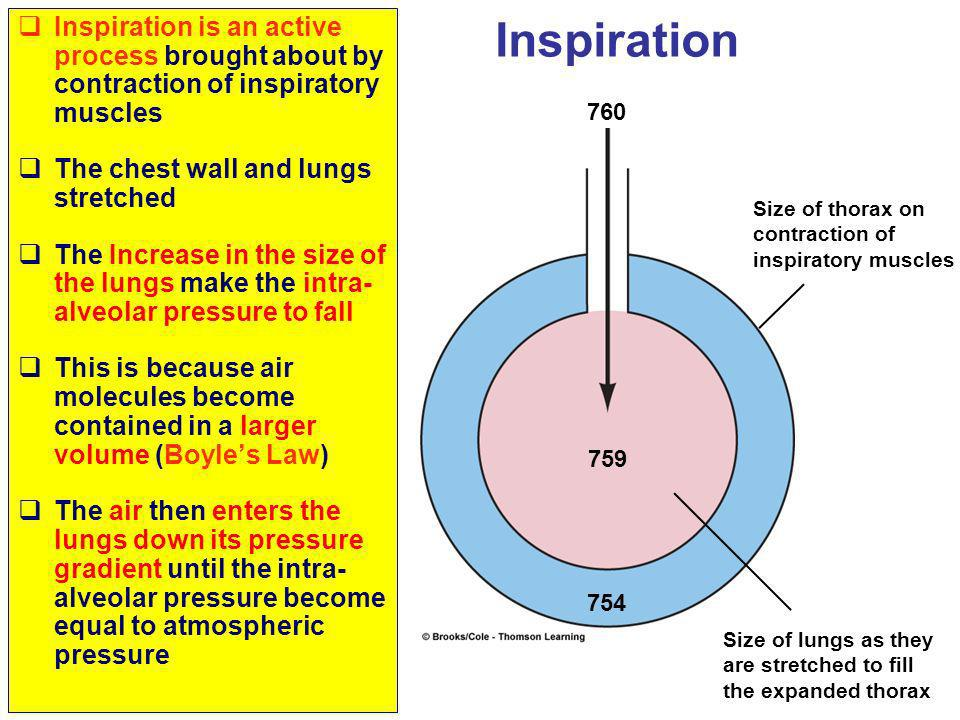 Inspiration is an active process brought about by contraction of inspiratory muscles